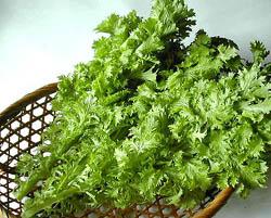 春野菜・ワサビ菜_b0073937_16335480.jpg