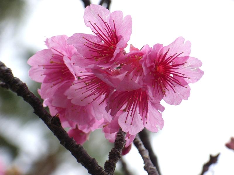2月17日(日) いってきました日本最南端島 その3_d0082944_12133139.jpg