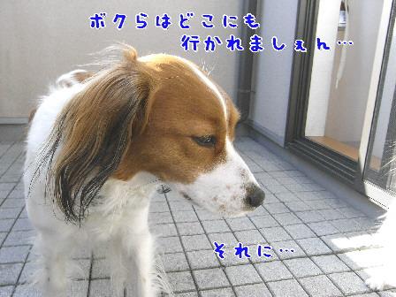d0013149_147251.jpg