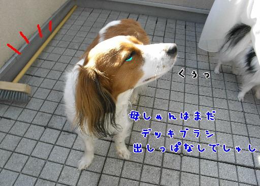 d0013149_1481327.jpg