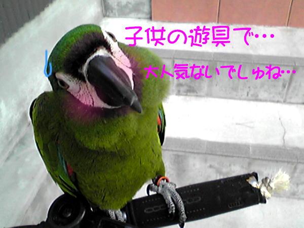 f0132055_9153417.jpg