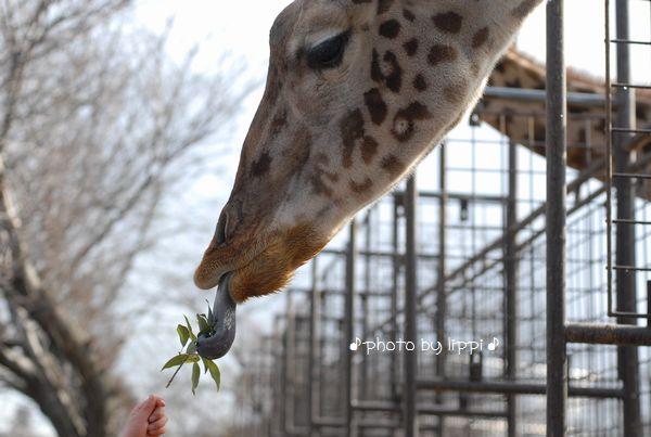 王子動物園サポーターズデイ_b0024758_1335092.jpg