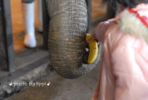 王子動物園サポーターズデイ_b0024758_1512165.jpg