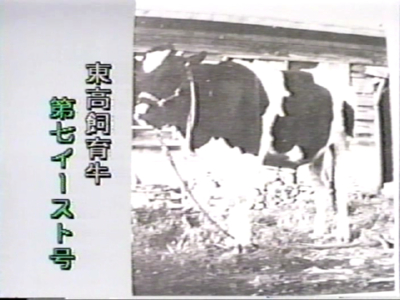 函館東高名物―もう牛はいない_f0147468_23501569.jpg