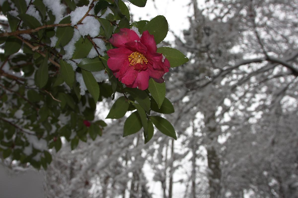 京都 雪景色 <大原> 3_f0021869_2111285.jpg