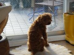 2008年2月17日 寒いなあ。。。         _b0098584_234069.jpg