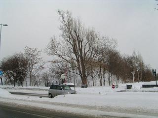 札幌市北区の最高峰?_f0078286_1611185.jpg