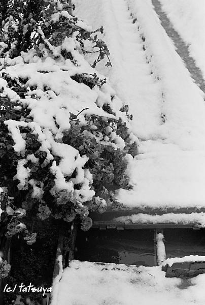 Feb  18  (mon)  雪が降る 4_f0139991_21311037.jpg