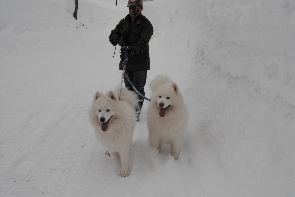 赤倉雪遊びツアー 2日目_a0049296_6364885.jpg
