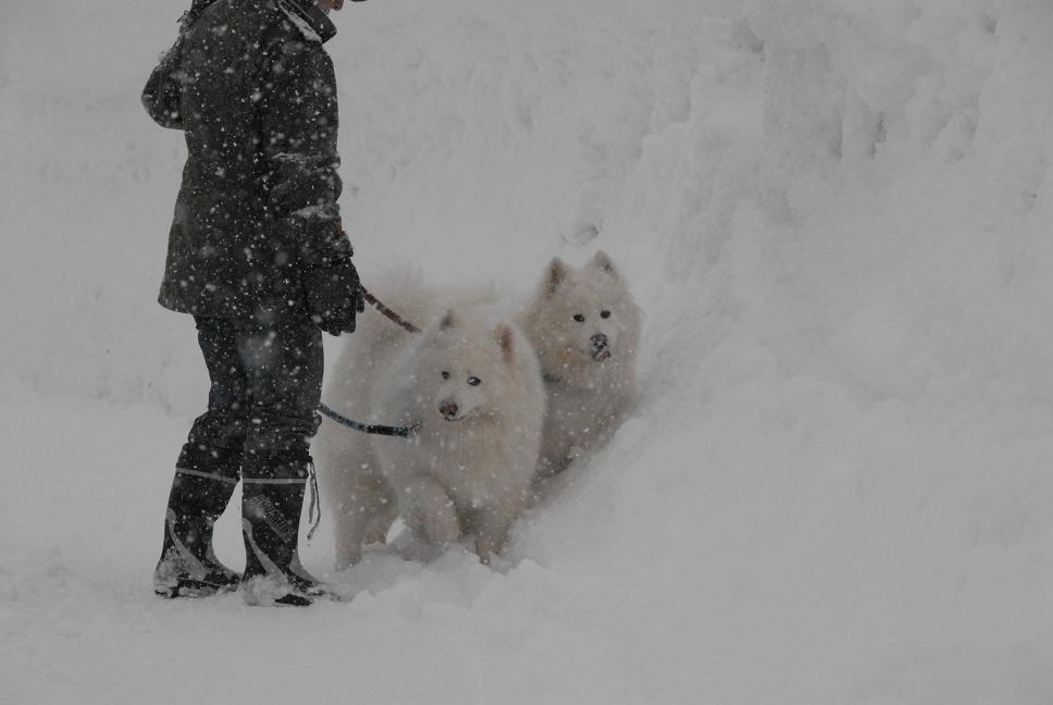 赤倉雪遊びツアー 2日目_a0049296_639364.jpg