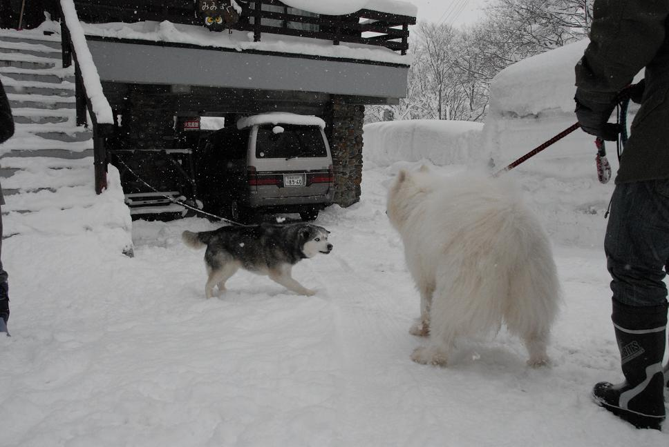 赤倉雪遊びツアー 2日目_a0049296_639998.jpg