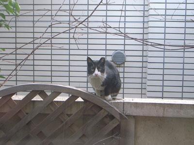 I am a cat_d0062651_19463166.jpg