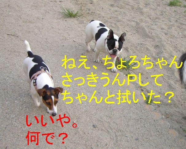 f0053952_16555683.jpg