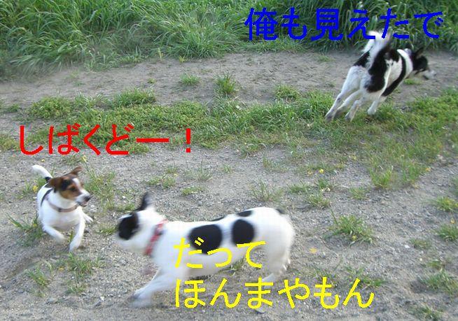 f0053952_1712514.jpg