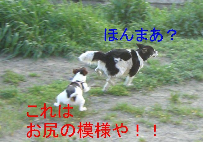 f0053952_1723597.jpg