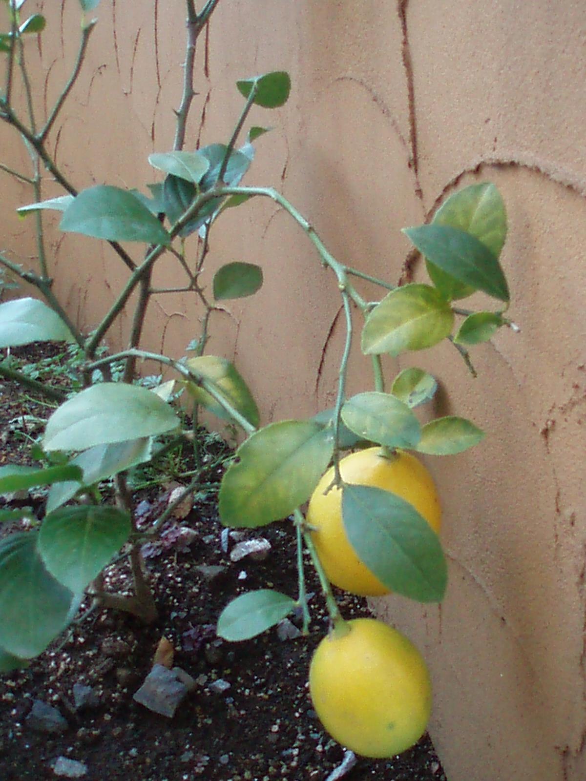 我が家の冬の庭_d0128354_15362972.jpg