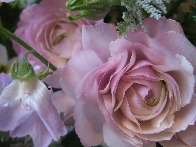 オークリーフ(ロシェルの花束)_f0049672_1403353.jpg