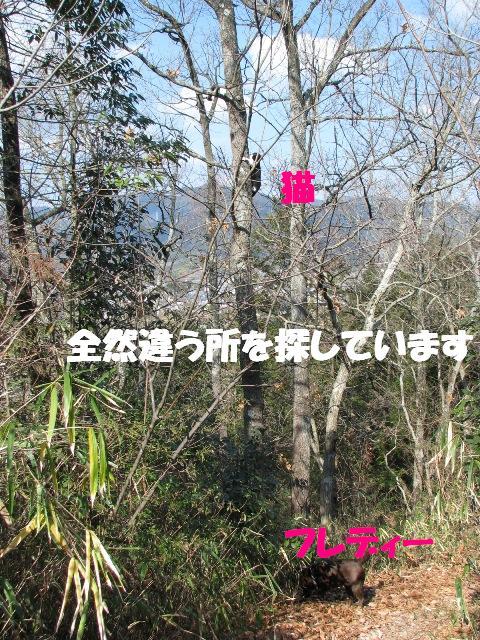 d0081210_20344879.jpg