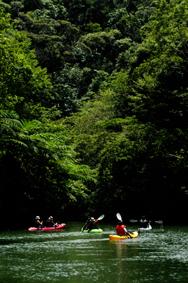新緑のやんばる ダム湖面遊覧やります!_f0121321_022916.jpg