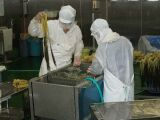 野沢菜の異物除去_e0137729_8381316.jpg