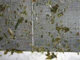 野沢菜の異物除去_e0137729_8385552.jpg