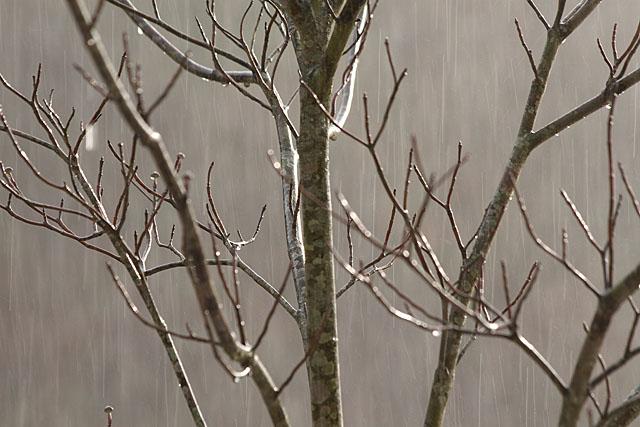 冬の雨_c0067040_22565385.jpg