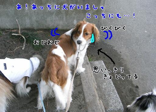 d0013149_11152431.jpg