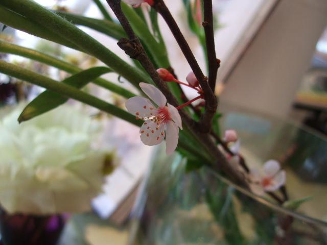 オークリーフ(小さな花)_f0049672_17134941.jpg