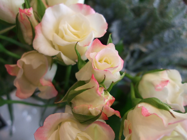 オークリーフ(小さな花)_f0049672_1748516.jpg
