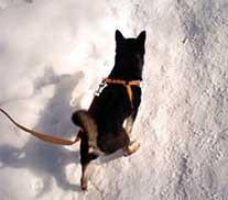 子犬_b0011075_20211562.jpg