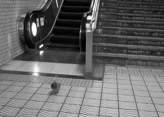 地下鉄の鳩_b0057679_8533485.jpg