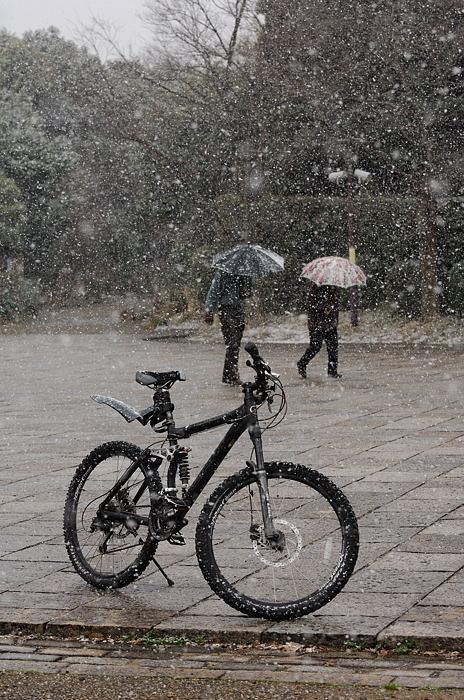 街角ニャンコ・瞬間雪国景色_f0032011_19513714.jpg