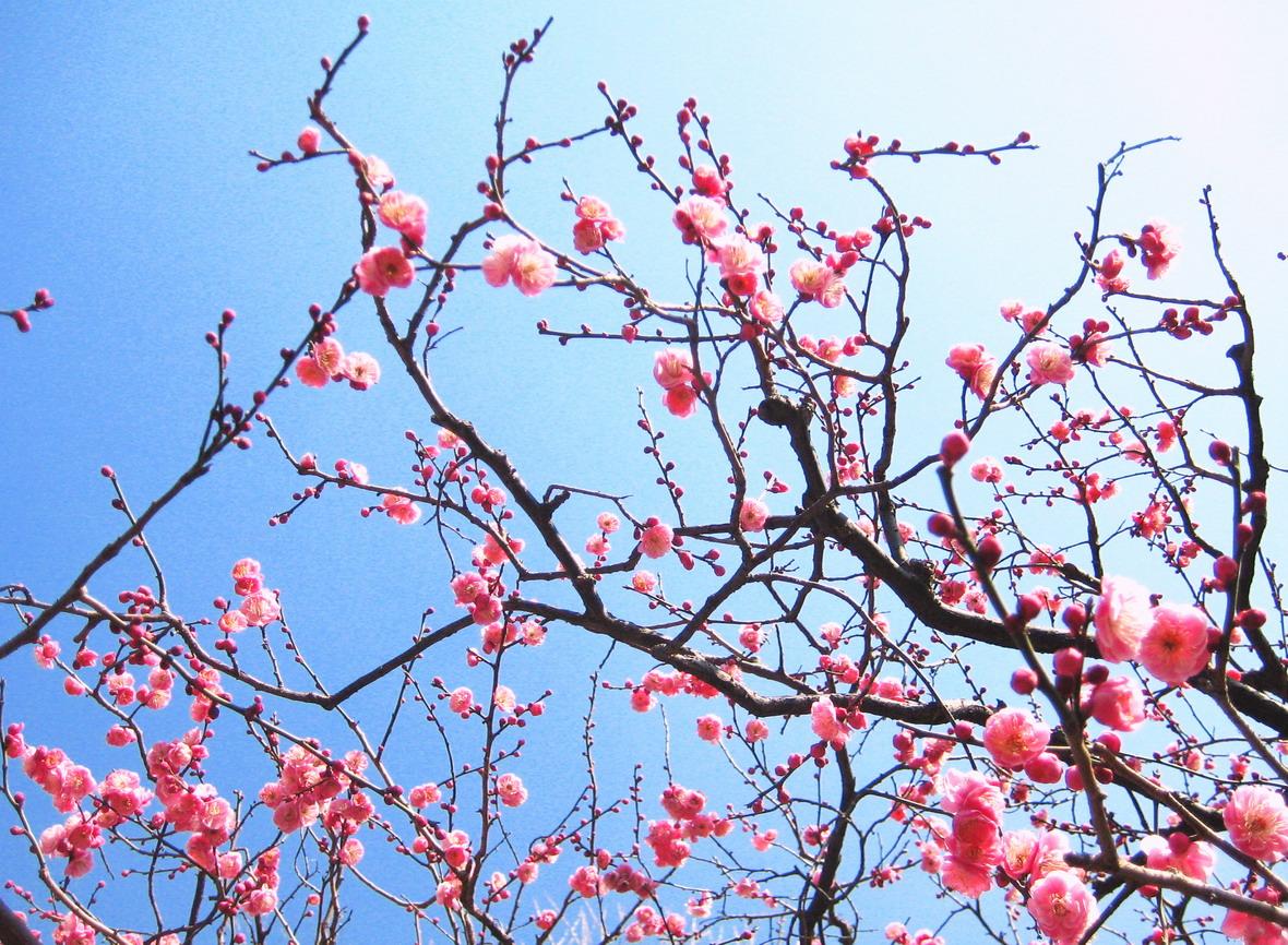 春の兆し_f0079943_1661210.jpg