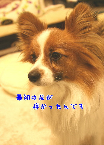 d0013149_0332179.jpg