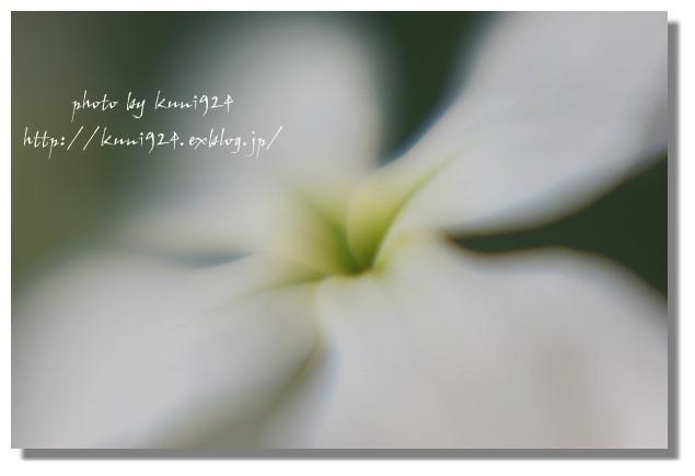 f0131365_17533510.jpg