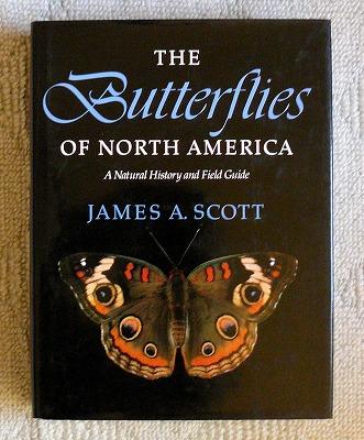 北アメリカの蝶図鑑_d0019074_13541122.jpg