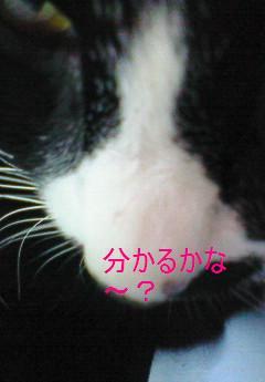 f0057094_1912422.jpg