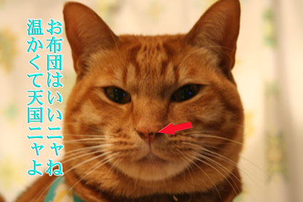 f0101903_762976.jpg