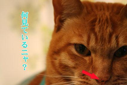 f0101903_765582.jpg