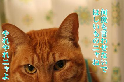 f0101903_772215.jpg