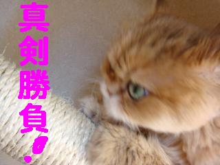 f0138304_9562555.jpg