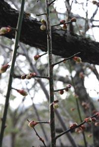 春の兆し_e0103024_1752258.jpg