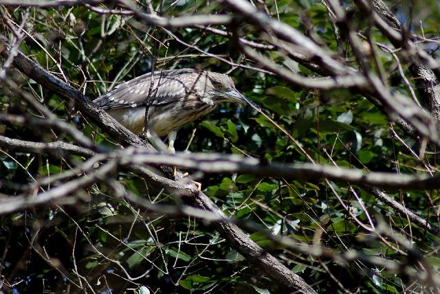 キタテハと目つきの悪い鳥_b0025738_1854832.jpg