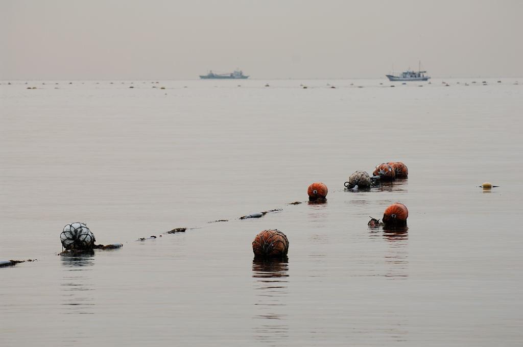 昨日の須磨海岸へ・・・日の出なし。(全てD2X)_d0148541_21262949.jpg