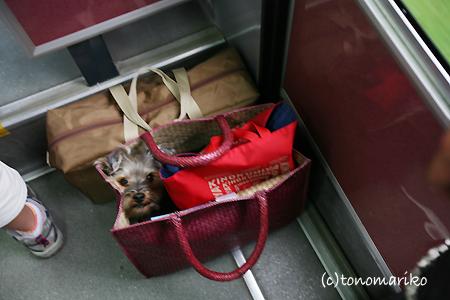 かばんの中から日本の旅_c0024345_7565277.jpg