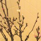 桜 part2_d0129249_1342071.jpg