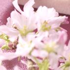 桜 part2_d0129249_1372026.jpg