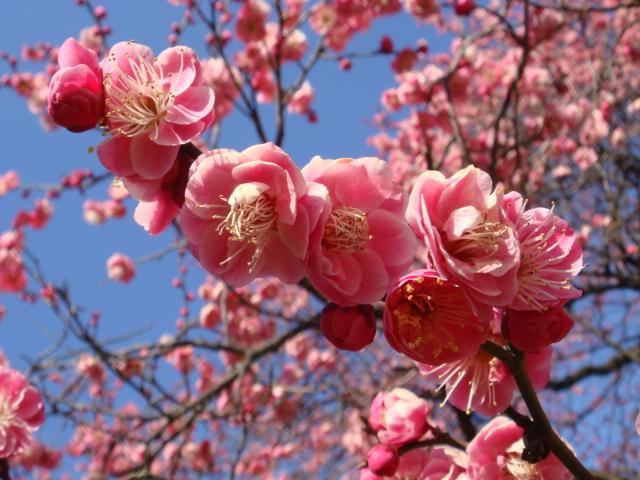 もうすぐ春ですね + 小ネタ_f0077051_033027.jpg