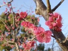 もうすぐ春ですね + 小ネタ_f0077051_0411176.jpg
