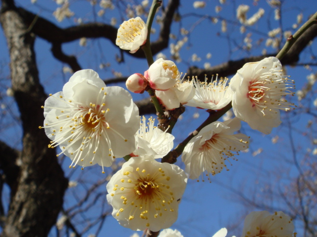もうすぐ春ですね + 小ネタ_f0077051_085446.jpg